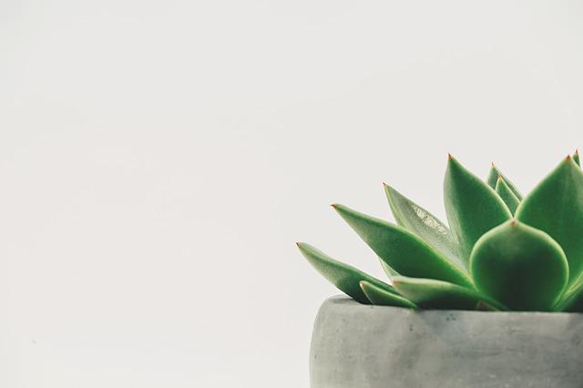 הרהורים על מינימליזם: מדוע הוא הפך לסגנון חיים מבוקש כל כך?