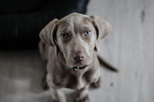 לא רק הליכות כל היתרונות באימוץ כלב למשפחה
